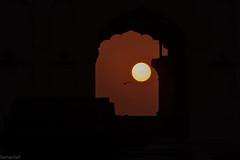 the golden hour (Salman Saif) Tags: life pakistan sunset bird window photography mosque lahore goldenhour badshahi suninwindow