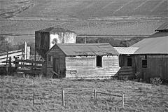 San Gregorio Ranch ... (sswj) Tags: ranch weathered woodbuildings bw availablewlight existinglight composition sangregorio sanmateocounty northerncalifornia california dslrfullframe nikon d600 nikkor28300mm scottjohnson