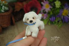 rex07 (Zhanna Zolotina) Tags: miniature dog ooak handmade toyzz tinydolhousetoyzz altair teddy bear dollhouse puppenhaus blythe