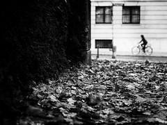 autumn (Sandy...J) Tags: olympus oldtown monochrom fotografie mono noir photography atmosphere atmosphäre alone allein altstadt blackwhite bw black bayern bavarian bike bicycle autumn herbst shadow white laub blätter city deutschland einfarbig germany fahrrad silhouette light licht street streetphotography sw schwarzweis strasenfotografie stadt urban radfahrer m