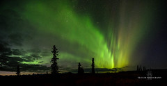 Eruption (Traylor Photography) Tags: alaska night northernlights interior auroraborealis north stars denalihighway parkshighway cantwell constellation wideangle spruce clouds