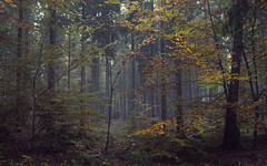 A view with forest, fog and some autumn (Netsrak) Tags: eifel mist fog nebel wald forst forest woods leaf leaves blatt bltter nature natur tree trees baum bume outdoor licht light colors colours farben grn gelb orange green yellow