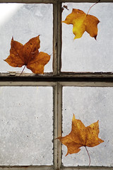 (esmeecadoni) Tags: europe netherlands beautifulearth leaves sony sunlight simple simplicity minimal light minimalistic littlethings photography holland old morning bokeh fall drenthe autumn nature