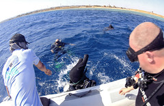 07.11 08 (KnyazevDA) Tags: diver disability undersea padi paraplegia amputee underwater disabled handicapped owd aowd scuba