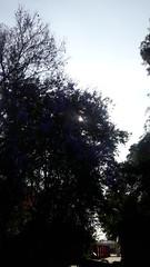 Momentos  desconectarse   #santiago #parque #chile #santiagodechile #atardecer #padrehurtado #caminar #pensar #ocaso #verde  #momentos #tranquilidad (claudio_viajero) Tags: santiagodechile parque momentos caminar pensar chile atardecer santiago tranquilidad verde padrehurtado ocaso