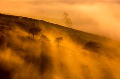 Breaking Through (Peter Quinn1) Tags: peakdistrict mist inversion shadow goldenlight trees