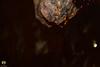 Gouttes d'eau au bout d'une stalactite dans les grottes de Beni Add (Ath Salem) Tags: algeria tlemcen montagnes mountains karstic karstiques calcaire perle du maghreb ain fezza الجزائر تلمسان جبال عين فزة grottes merveilleuses féériques beni add مغارة بني عاد monts algérie parc national gorges elourit stalactite stalagmite eau water الحليمات رواسب كلسية صواعد caves grotto aad souterrain الحديقة الوطنية paysage nature tourisme découverte beauté beauty طبيعة سياحة park