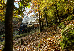Through the Woods (Kingmoor Klickr) Tags: greathagg woods lakeside haverthwaite heritage railway fairburn tank 42073 cumbria