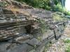 Ordovician Mt. Merino Formation, Granville, NY (ArgyleMJH) Tags: geology taconic cambrian ordovician mountmerino shale mudstone slate siliceous overthrust klippe giddingsbrookslice granville washingtoncounty newyork graptolites