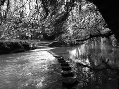Hop, Skip, Jump (BKNielsen4) Tags: box hill uk stepping stones walking stream tree running reflections reflection bw serene peaceful tranquil surrey