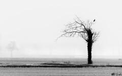 (Gi_shi) Tags: bn bnw bw biancoenero tree albero risaie rice ricefield novara piemonte piedmont italia italy field campagna nebbia