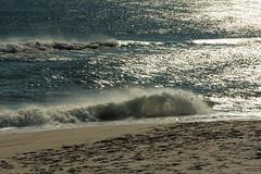 DSC_0973-2 (Michael P Bartlett) Tags: maryland assateagueisland beaches