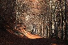 La Sarvaz (bulbocode909) Tags: valais suisse saillon lasarvaz forts montagnes nature automne arbres chemins