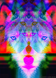Larry Carlson, Wonder Wolf, digital chromogenic print, 2011