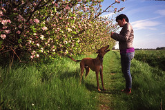 Cambridgeshire Orchards (Trojan_Llama) Tags: camera dog film 35mm blossom olympus orchard xa2 apples analogue xa agfa olympusxa2 cambridgeshire compact lurcher appletrees walkingthedog poundland agfaphoto zonefocus vistaplus200