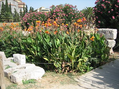069 - Flowers (Scott Shetrone) Tags: flowers plants other graveyards events places athens greece 5th kerameikos anniversaries
