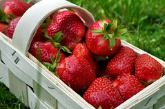 Magusad austria maasikad (anuwintschalek) Tags: red summer rot home juni garden austria strawberry sweet sommer wiesen strawberries 40mm garten sss niedersterreich kodu erdbeere aed suvi erdbeeren magus wienerneustadt micronikkor 2013 punane maasikad maasikas nikond90