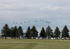 Flying over the greens (Joanna Kurowski) Tags: trees green nature outdoors movement golfcourse flyingbirds