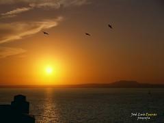 Amanecer (jos luis Zueras) Tags: paisajes mar gaviotas islas baleares palmademallorca ocano olympuse500 josluiszueras goldenawardlostcontperdidos amanecedes