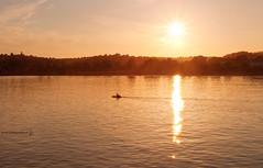 Sailing into the Sunset (RichardBeech) Tags: sunset sea summer orange sun reflection water night gold evening boat seaside warm devon torquay 2013 canon1740mm canon5dmarkii richardbeech wwwrichardbeechphotographycom