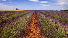 summer (zozoros) Tags: summer sky field landscape estate purple lavender paesaggio lvanda