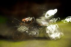 Spain_Bike trip_241 (jjay69) Tags: travel vacation holiday bike fun spain europe north transport relaxing engine fast hobby supermoto ktm motorbike motorcycle vtwin powerful motorbikes interest smt enjoyment pleasure touring northernspain 1000cc greathandling 2cylinders supermotot ktmsmt spanishmainland