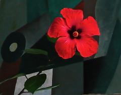 Vermischung (web.werkraum) Tags: stillleben ks blüte kontrast hintergrund 2013 komplimentär helldunkel ereignis roseneibisch omot tagwerk vermischung bildhaft