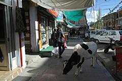 2nd day - rove in Leh (9) (O.K_dollphoto) Tags: sigma leh ladakh merrill dp1