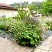 Zahrada rodinného domu