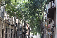 green (Josiedurney) Tags: barcelona life street trees houses light summer people sun green home nature grass architecture vintage spain mine shadows view darkness bright live parks tall catalunya roads lovely dappled upwards 2013