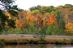 Autumn 2013 (Allen's Photography) Tags: autumn trees fall colors beautiful minnesota lakes mn northernminnesota hibbing allensphotography