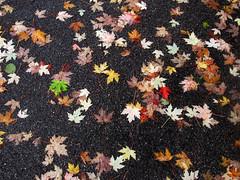 Bladeren - Leaves (naturum) Tags: autumn oktober fall netherlands leaves amsterdam october herfst nederland bladeren flevopark 2013
