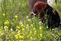 Photographer (N.Kuratani) Tags: flower japan photographer osaka bandai