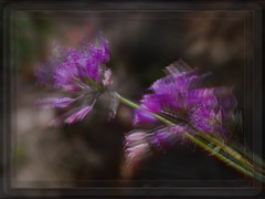 Wilds Echoes (Karen McQuilkin) Tags: nature spring hike impression purples theawardtree karenmcquilkin wildechoes navajoblessing