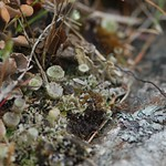 lichen along the wall