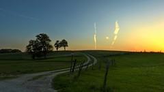 Evening Light (Erich Hochstöger) Tags: sky tree field grass fence way landscape lumix austria evening abend österreich weide track meadow wiese himmel panasonic trail grassland zaun landschaft bäume niederösterreich hdr weg abendstimmung loweraustria mostviertel fz150