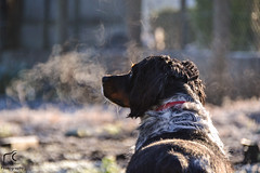 Eliot (Mélanie Du) Tags: morning winter dog chien pet france cute nature beautiful beauty puppy french photography photo reflex amazing nice nikon photographie hiver picture pic perro amateur campagne manana matin d3100 nikond3100