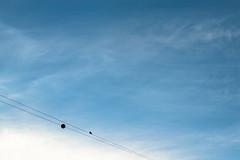 Aside (darioseventy) Tags: bird solo sky cielo blue minimalism minimalismo minimal minimalist clouds nuvole cloudporn