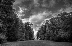 Autumn is  looming (sarahmcomish) Tags: hdr trees westonbirt autumn blackandwhite monochrome arboretum nature outdoor landscape