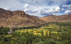 Phyang Gompa (Fil.ippo) Tags: phyanggompa monastery ladakh leh india buddhism landscape mountains filippo filippobianchi d610 birds clouds hdr