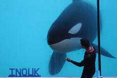 IMG_6899 (Bebelouga) Tags: orque marineland killerwhale orca