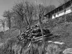 la casa e la legna (Clay Bass) Tags: balma baita bw fuji jpg trees xf1