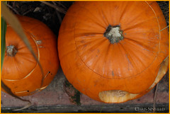 Pumpkins (Chris Sinfield) Tags: pumpkins halloween garden bricks flickr top organic outdoors outside england festive fun compost food canon photography orange lid eyes vegetable plant wall f56