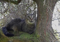 Happy Caturday (ute_hartmann) Tags: