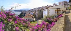 Lastres (roli_photos) Tags: pueblo marinero casas flores rosas asturias lastres nikon d600 desenfoque naturaleza