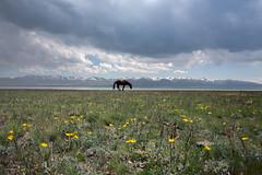Kyrgyz-(28) (Pascal Mannaerts) Tags: asia centralasia travel silkroad people portrait culture landscape
