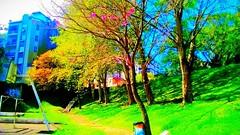 14241413_1089300941119495_8276514819954026294_o (gesielfreire) Tags: landscape light collor city cidade paisaje paisagem park