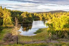 The Lochan (Geoff France) Tags: scotland highlands scottishhighlands loch water lake mere cairngorms cairngormsnationalpark landscape scottishlandscape trees outdoor