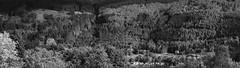 Miniature Houses - Kilmun Oct 2016 (GOR44Photographic@Gmail.com) Tags: kilmun argyll bute scotland mono bw trees house houses gor44 fujifilm xpro1 xf35mmf14 35mmf14 glenkin cowal