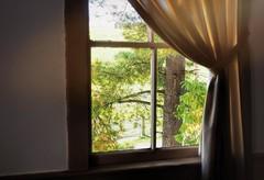 The View - HFF (TuthFaree) Tags: elements curtain fence hff fencefriday amish home ohio holmescounty tree
